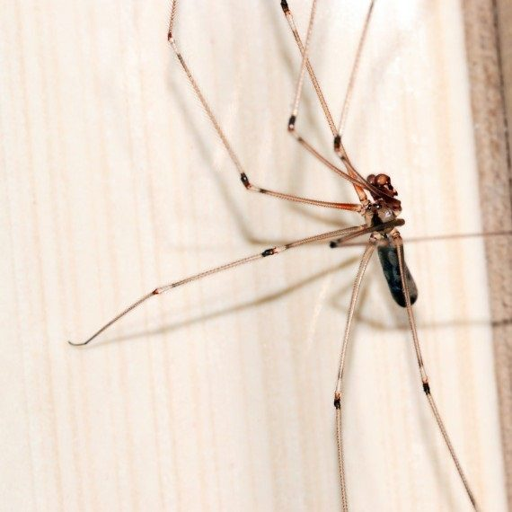Spiders, Pest Control in Morden Park, Morden, SM4. Call Now! 020 8166 9746