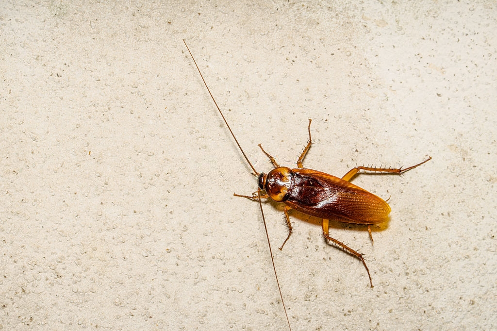 Cockroach Control, Pest Control in Morden Park, Morden, SM4. Call Now 020 8166 9746